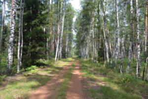Жителям области напомнили о соблюдении противопожарного режима в лесах